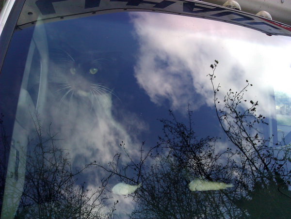 cat on dashboard of moving truck